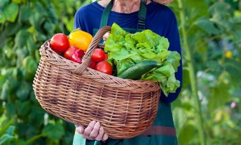 What Can You Do to Make Gardening Easier and Safer for Your Senior?
